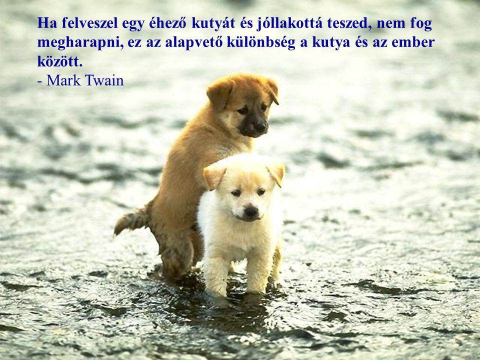 Ha felveszel egy éhező kutyát és jóllakottá teszed, nem fog megharapni, ez az alapvető különbség a kutya és az ember között.