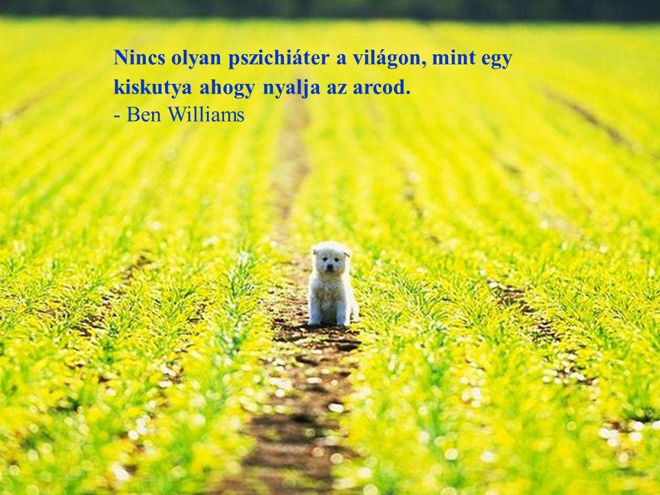 Nincs olyan pszichiáter a világon, mint egy kiskutya ahogy nyalja az arcod.