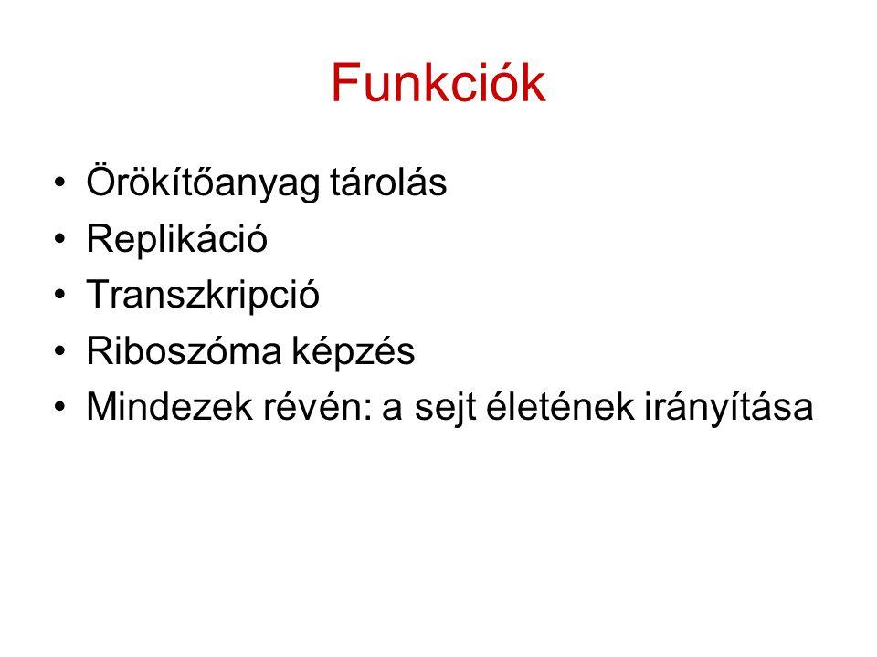 Funkciók Örökítőanyag tárolás Replikáció Transzkripció