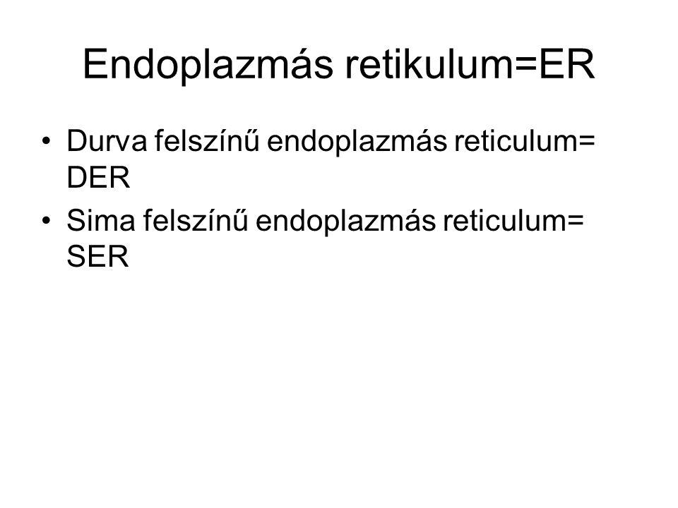 Endoplazmás retikulum=ER