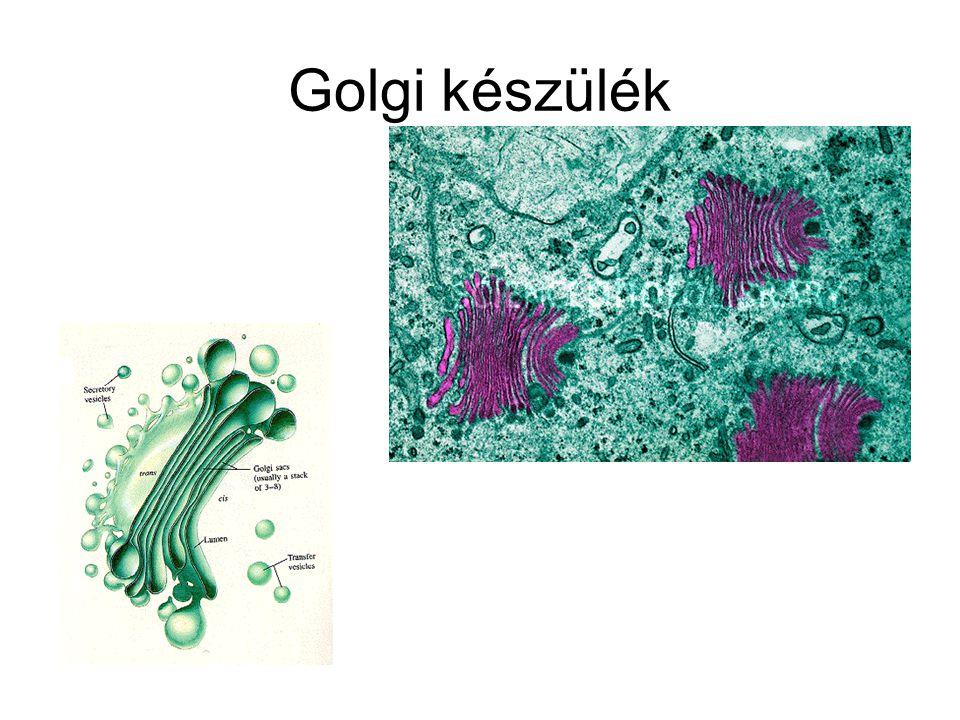 Golgi készülék