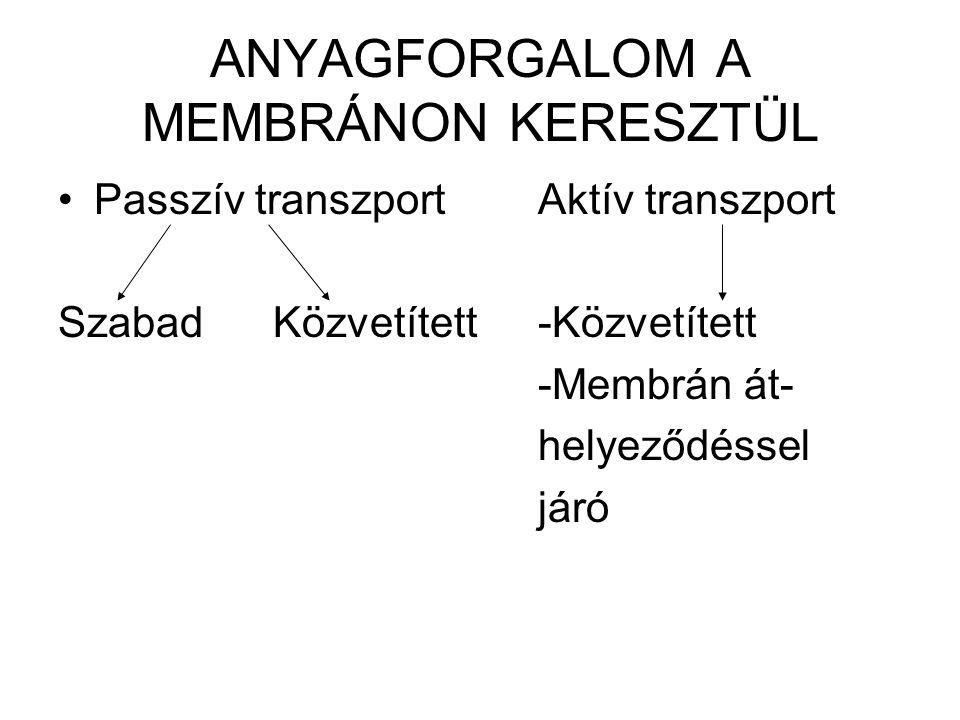 ANYAGFORGALOM A MEMBRÁNON KERESZTÜL