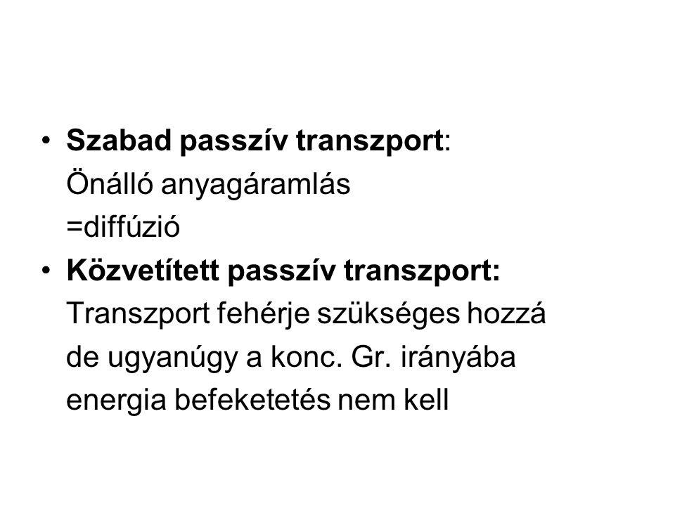 Szabad passzív transzport: