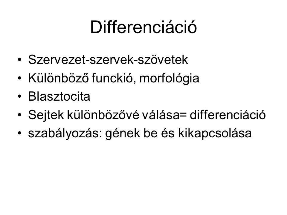 Differenciáció Szervezet-szervek-szövetek