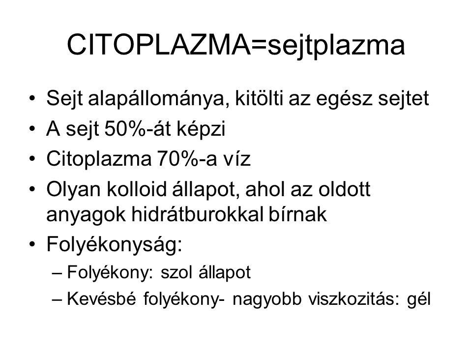 CITOPLAZMA=sejtplazma