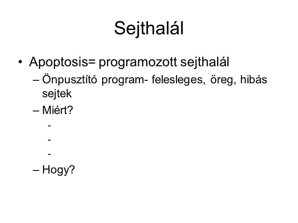 Sejthalál Apoptosis= programozott sejthalál