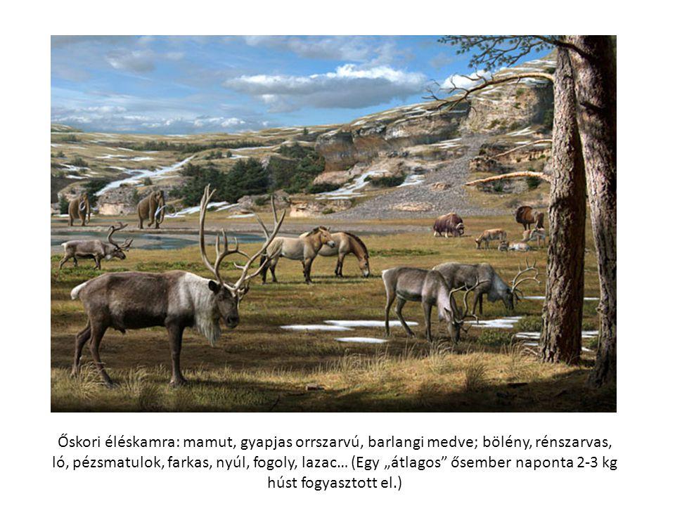 """Őskori éléskamra: mamut, gyapjas orrszarvú, barlangi medve; bölény, rénszarvas, ló, pézsmatulok, farkas, nyúl, fogoly, lazac… (Egy """"átlagos ősember naponta 2-3 kg húst fogyasztott el.)"""