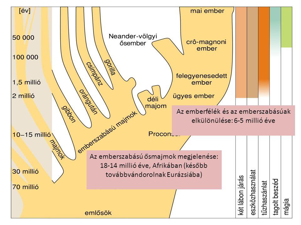Az emberfélék és az emberszabásúak elkülönülése: 6-5 millió éve