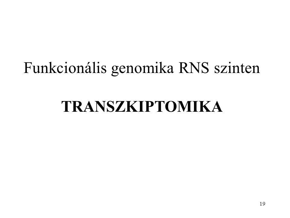 Funkcionális genomika RNS szinten