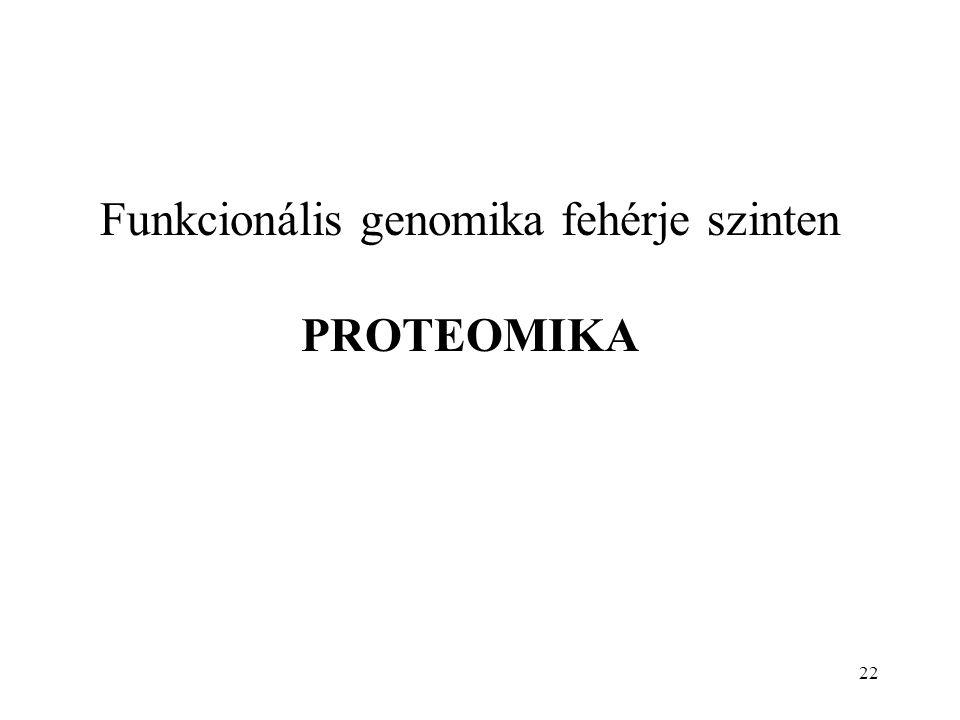Funkcionális genomika fehérje szinten