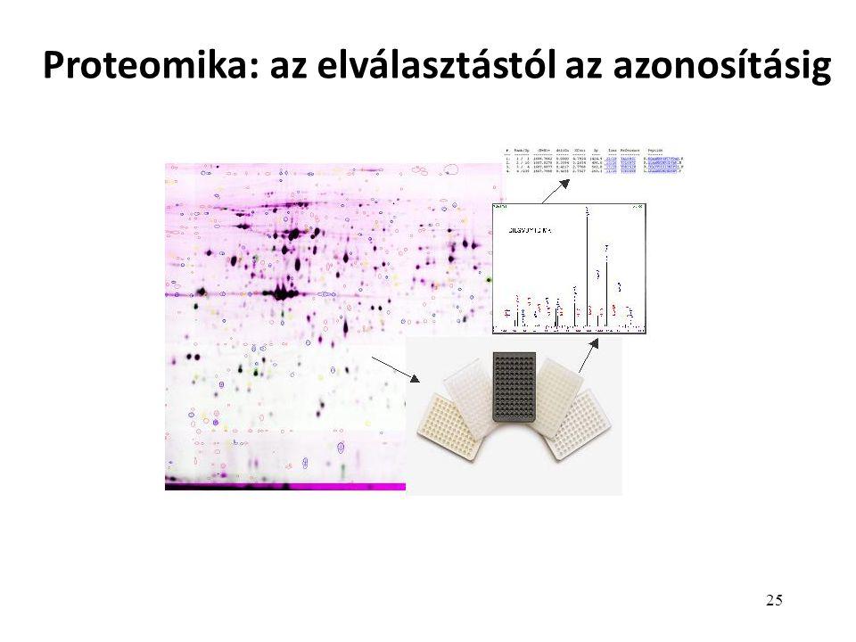Proteomika: az elválasztástól az azonosításig