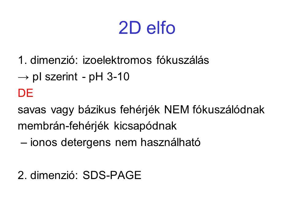 2D elfo 1. dimenzió: izoelektromos fókuszálás → pI szerint - pH 3-10