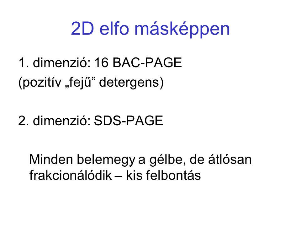 "2D elfo másképpen 1. dimenzió: 16 BAC-PAGE (pozitív ""fejű detergens)"