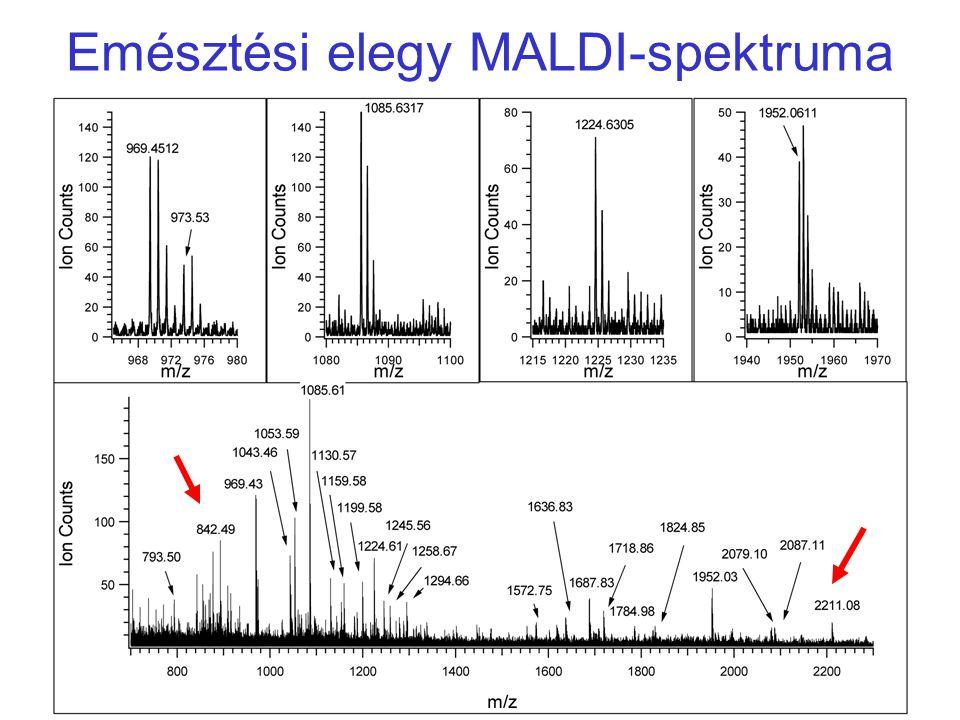 Emésztési elegy MALDI-spektruma