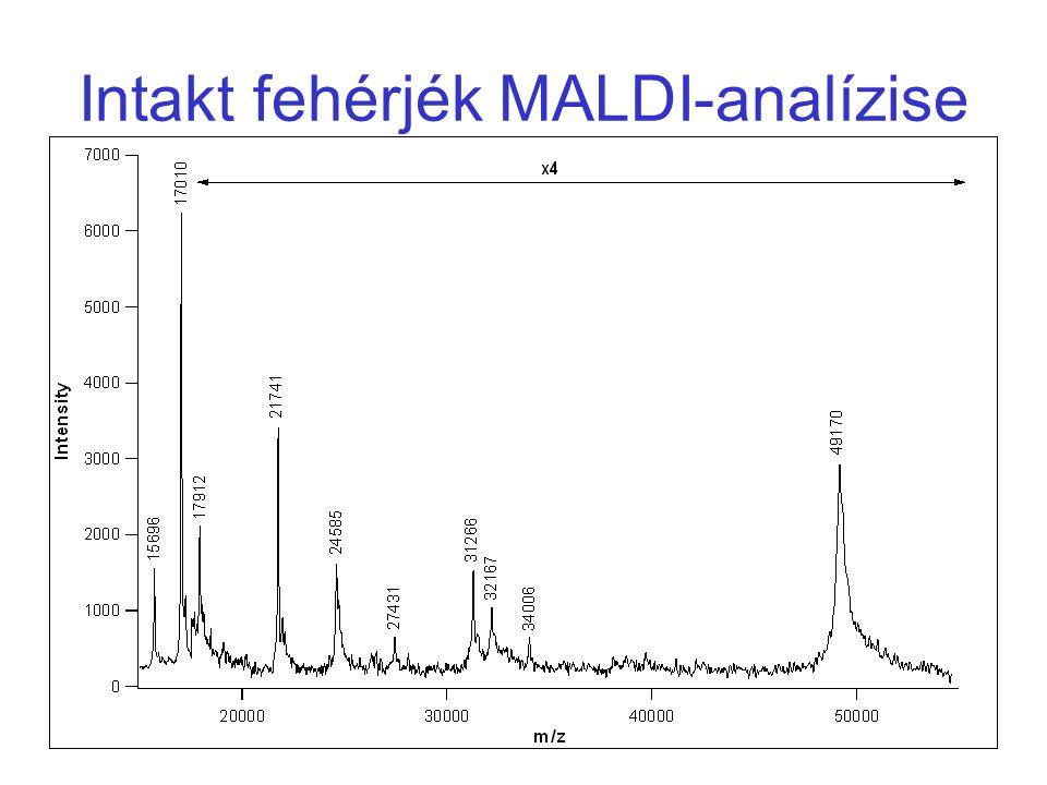 Intakt fehérjék MALDI-analízise