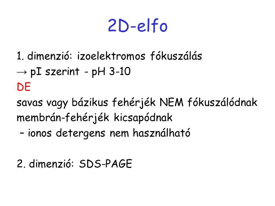 2D-elfo 1. dimenzió: izoelektromos fókuszálás → pI szerint - pH 3-10