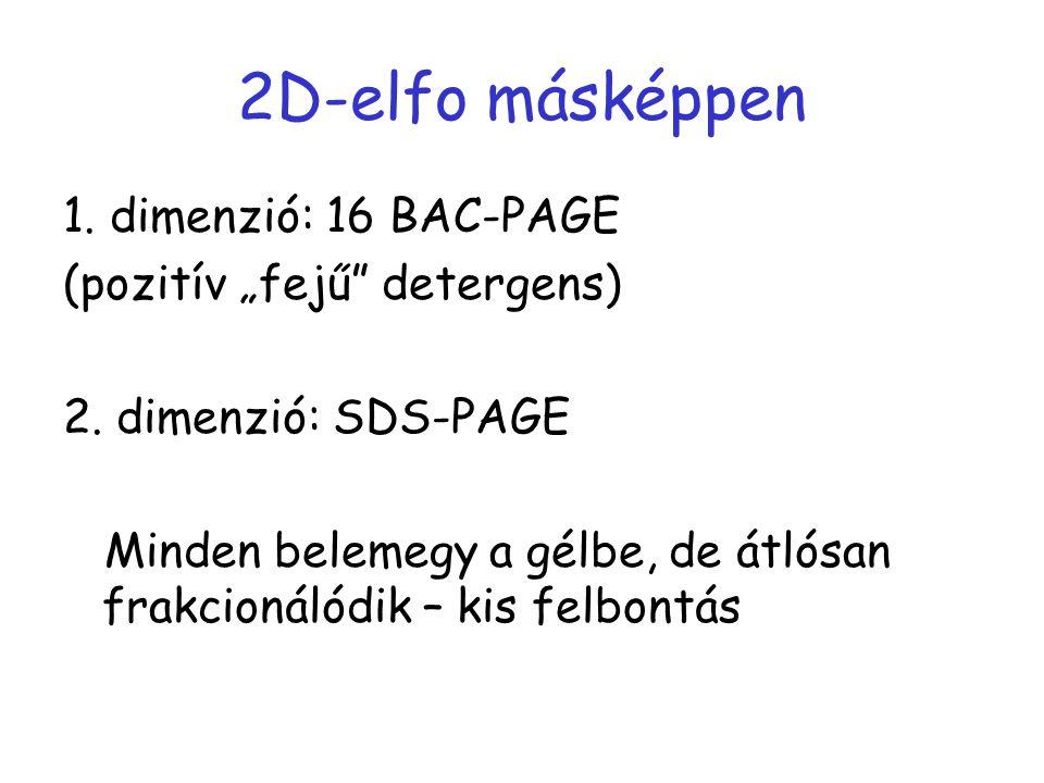 "2D-elfo másképpen 1. dimenzió: 16 BAC-PAGE (pozitív ""fejű detergens)"
