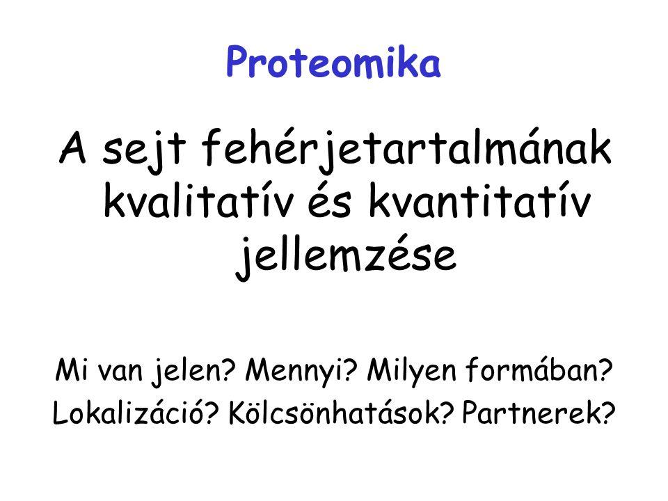 A sejt fehérjetartalmának kvalitatív és kvantitatív jellemzése
