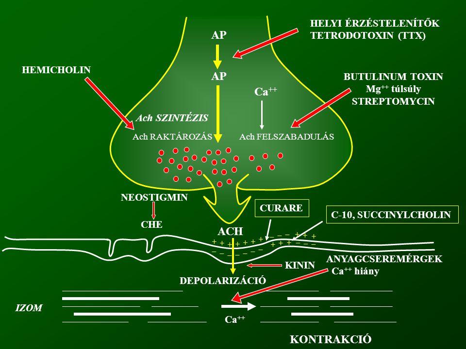 AP AP Ca++ ACH KONTRAKCIÓ HELYI ÉRZÉSTELENÍTŐK TETRODOTOXIN (TTX)
