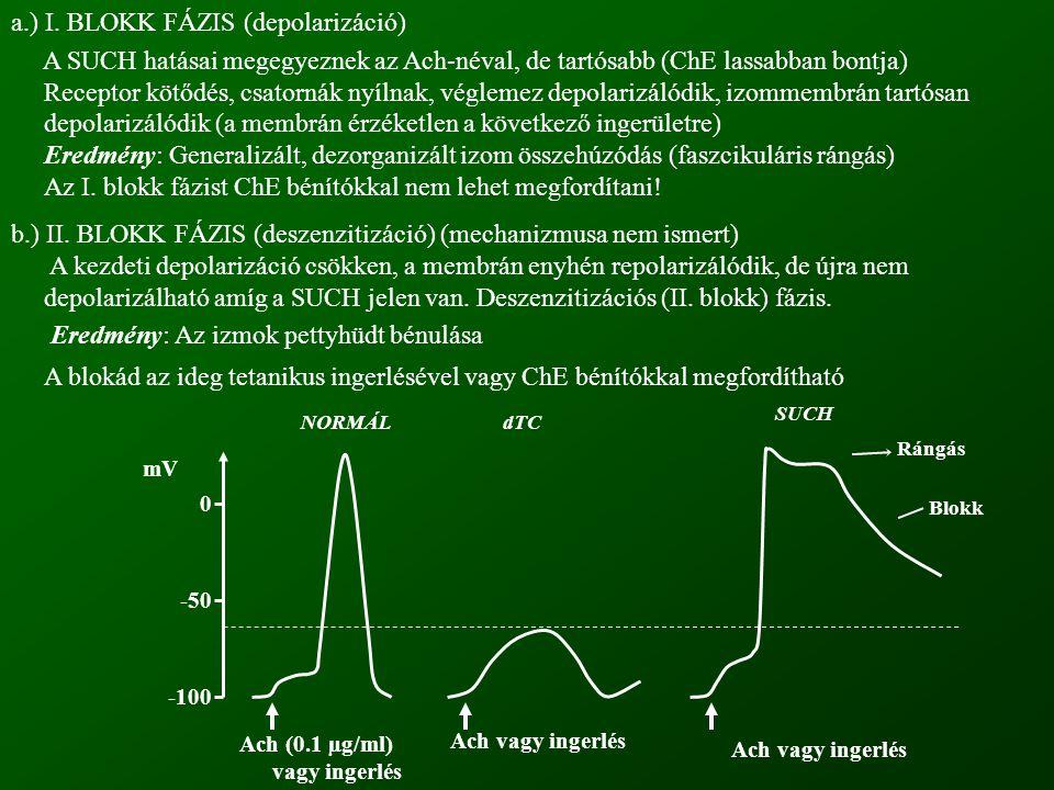 a.) I. BLOKK FÁZIS (depolarizáció)