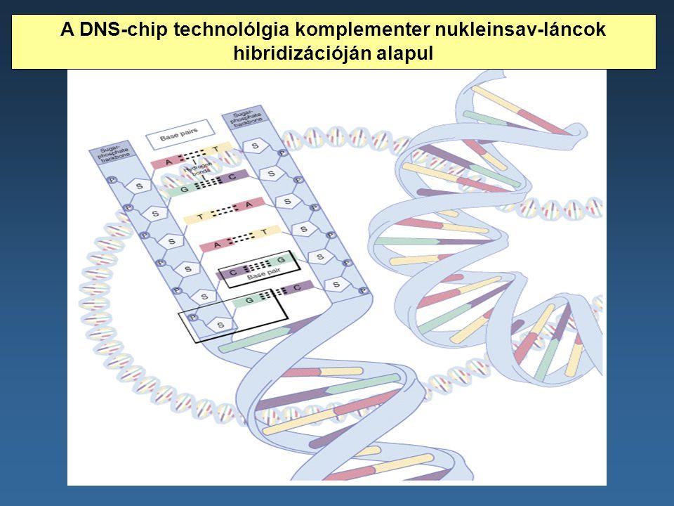 A DNS-chip technolólgia komplementer nukleinsav-láncok hibridizációján alapul
