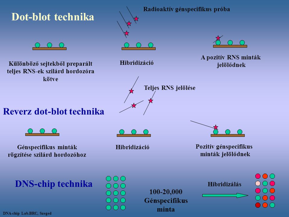 Dot-blot technika Reverz dot-blot technika DNS-chip technika