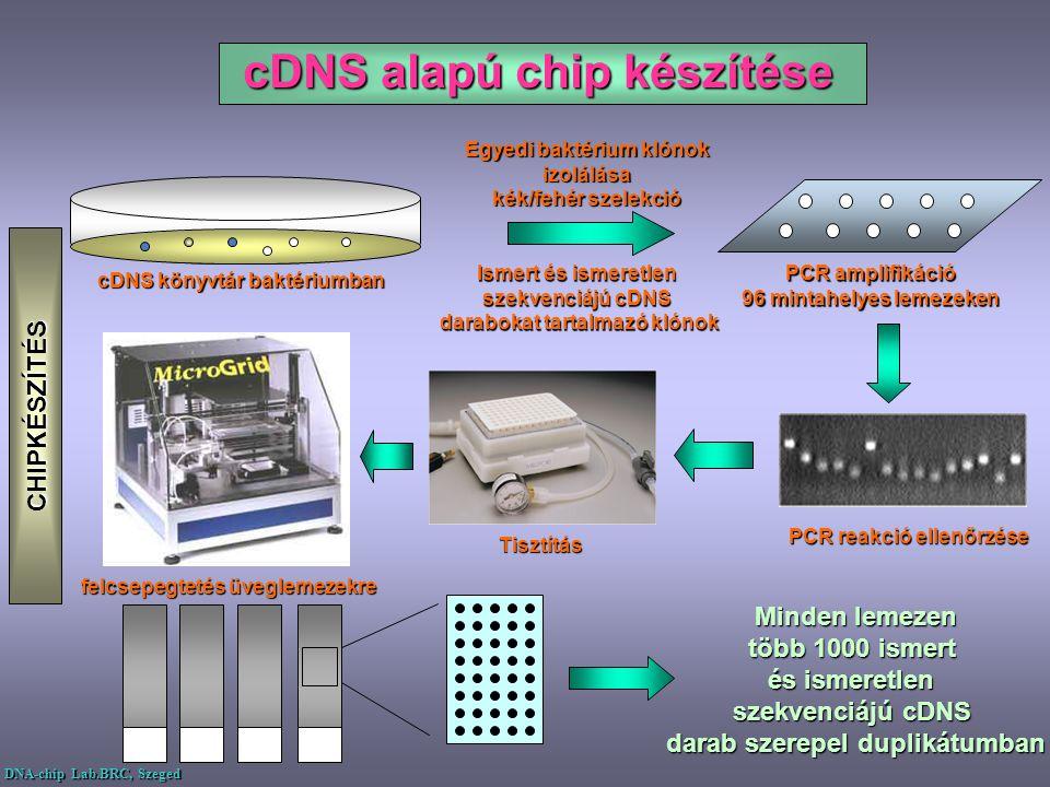 cDNS alapú chip készítése