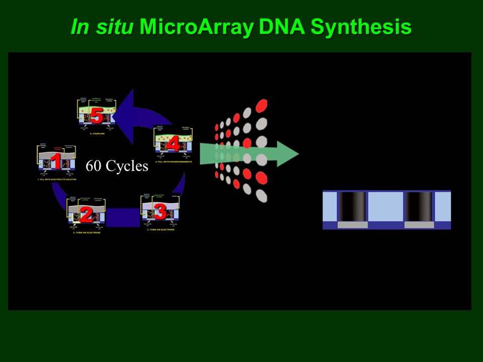 In situ MicroArray DNA Synthesis