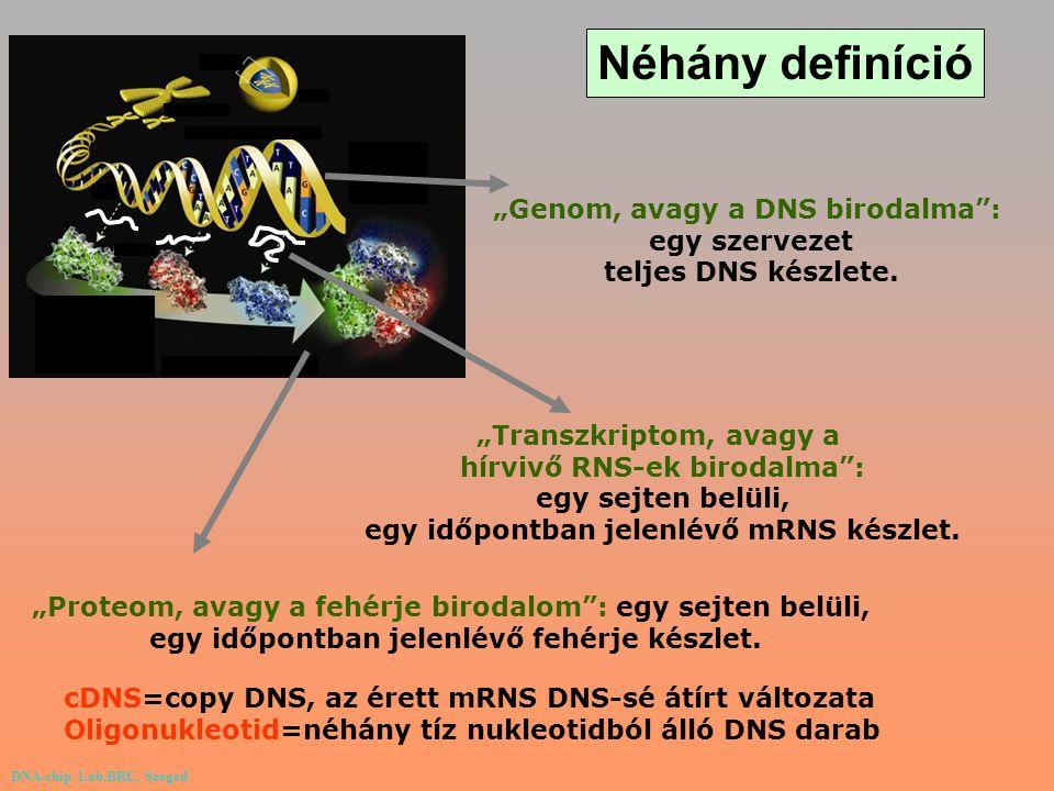 """Néhány definíció """"Genom, avagy a DNS birodalma : egy szervezet"""