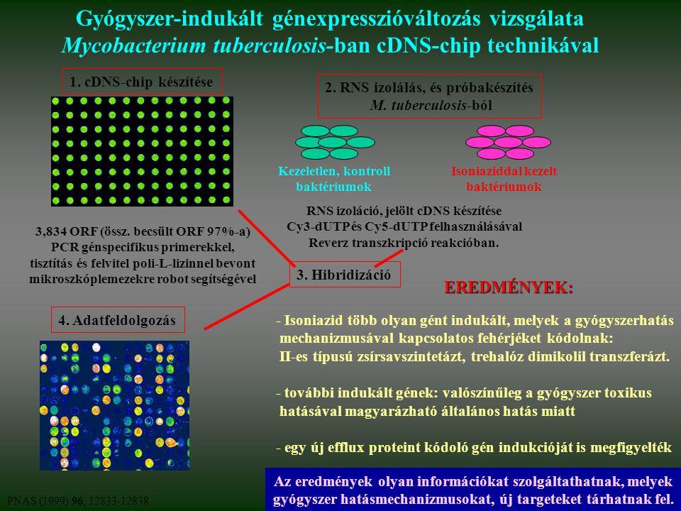 Gyógyszer-indukált génexpresszióváltozás vizsgálata