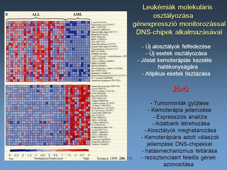 Jövő: Leukémiák molekuláris osztályozása génexpresszió monitorozással