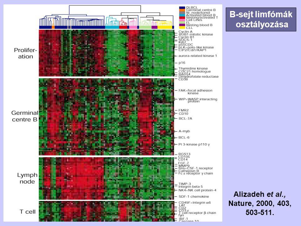 B-sejt limfómák osztályozása