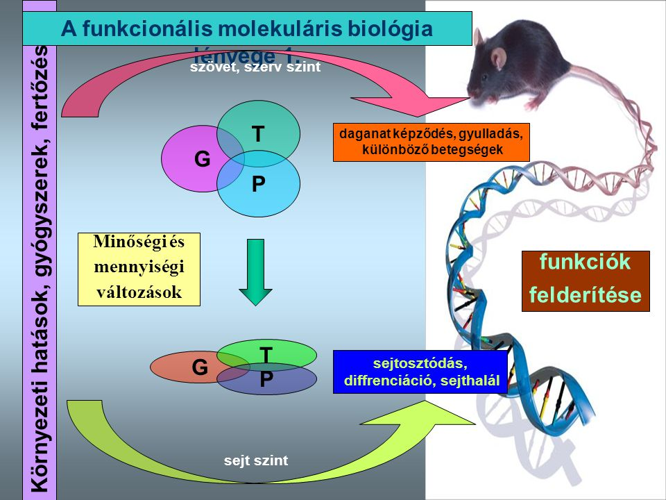 A funkcionális molekuláris biológia lényege 1.