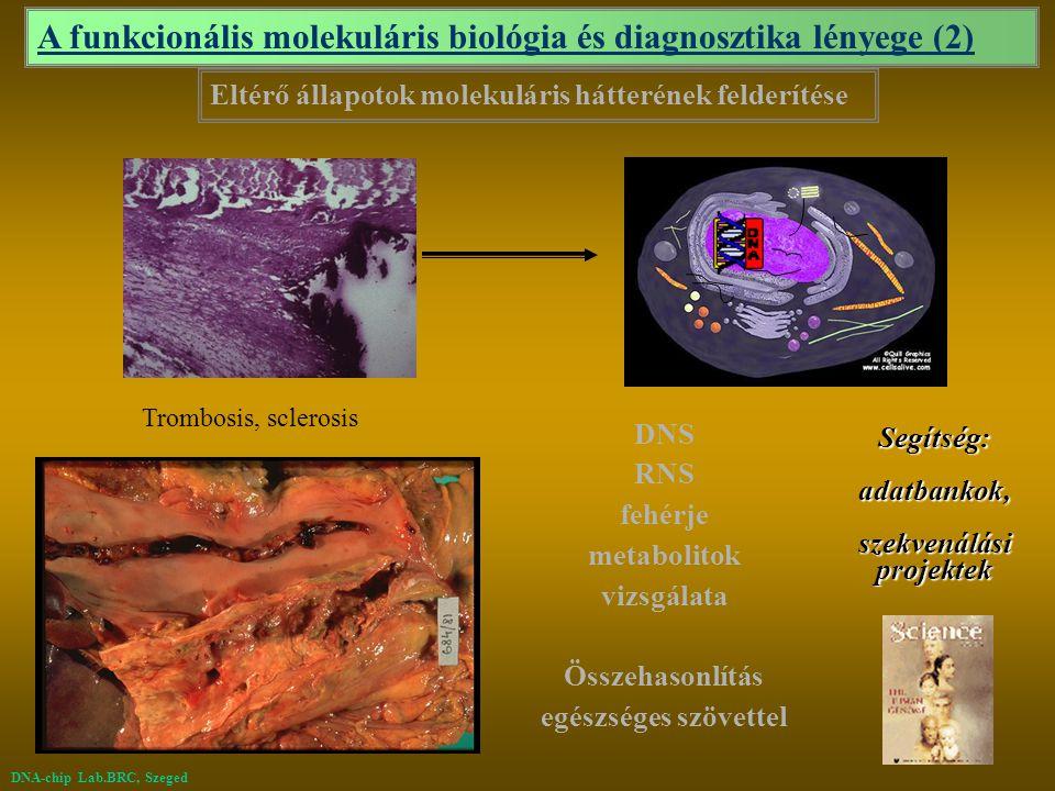 A funkcionális molekuláris biológia és diagnosztika lényege (2)