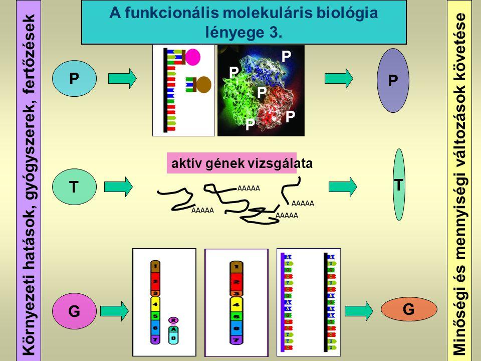 A funkcionális molekuláris biológia lényege 3.