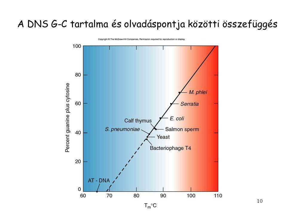 A DNS G-C tartalma és olvadáspontja közötti összefüggés