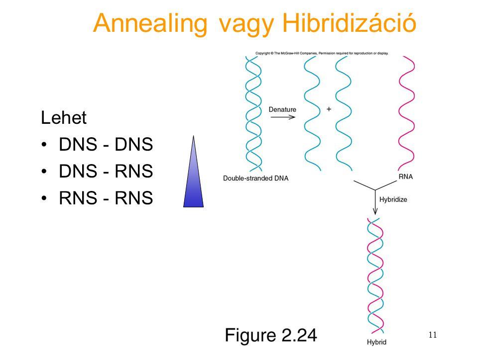 Annealing vagy Hibridizáció