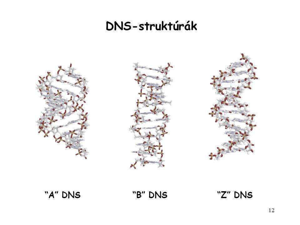DNS-struktúrák A DNS B DNS Z DNS