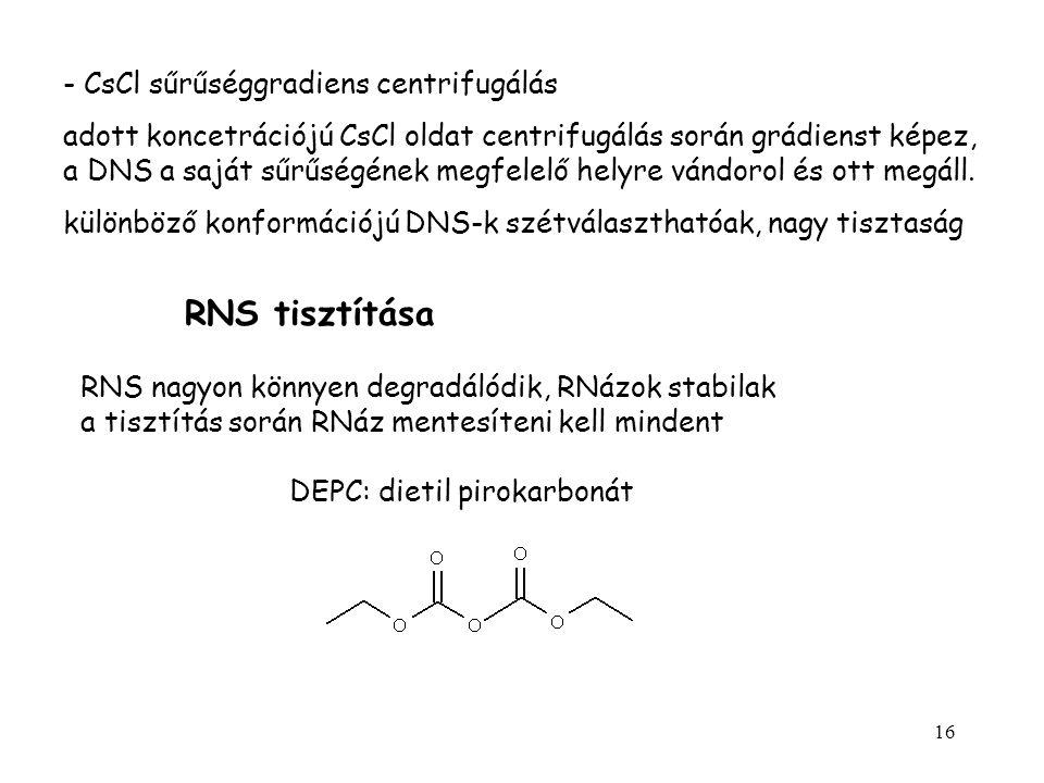 RNS tisztítása - CsCl sűrűséggradiens centrifugálás