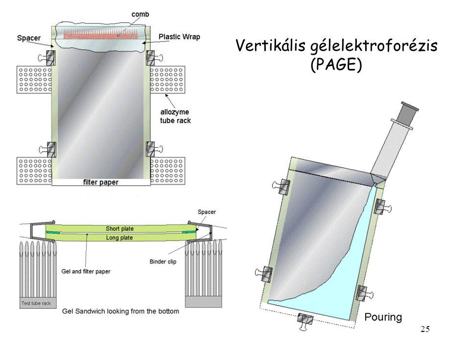 Vertikális gélelektroforézis (PAGE)