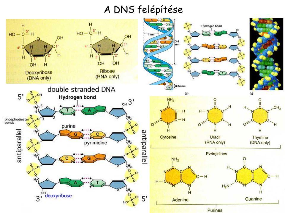 A DNS felépítése