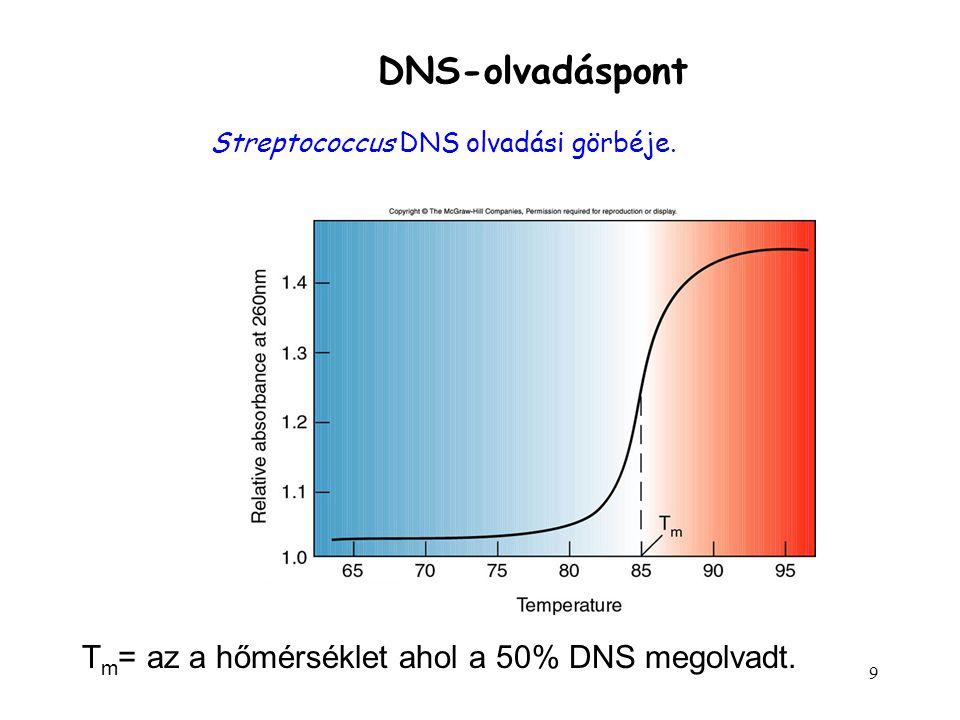 DNS-olvadáspont Tm= az a hőmérséklet ahol a 50% DNS megolvadt.