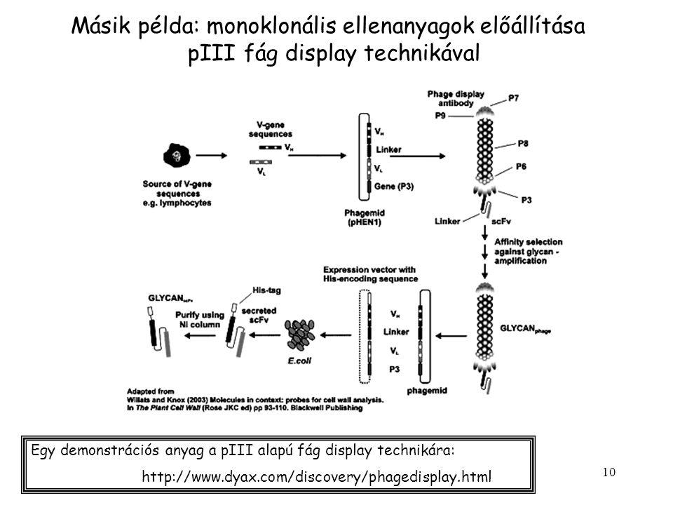 Másik példa: monoklonális ellenanyagok előállítása pIII fág display technikával