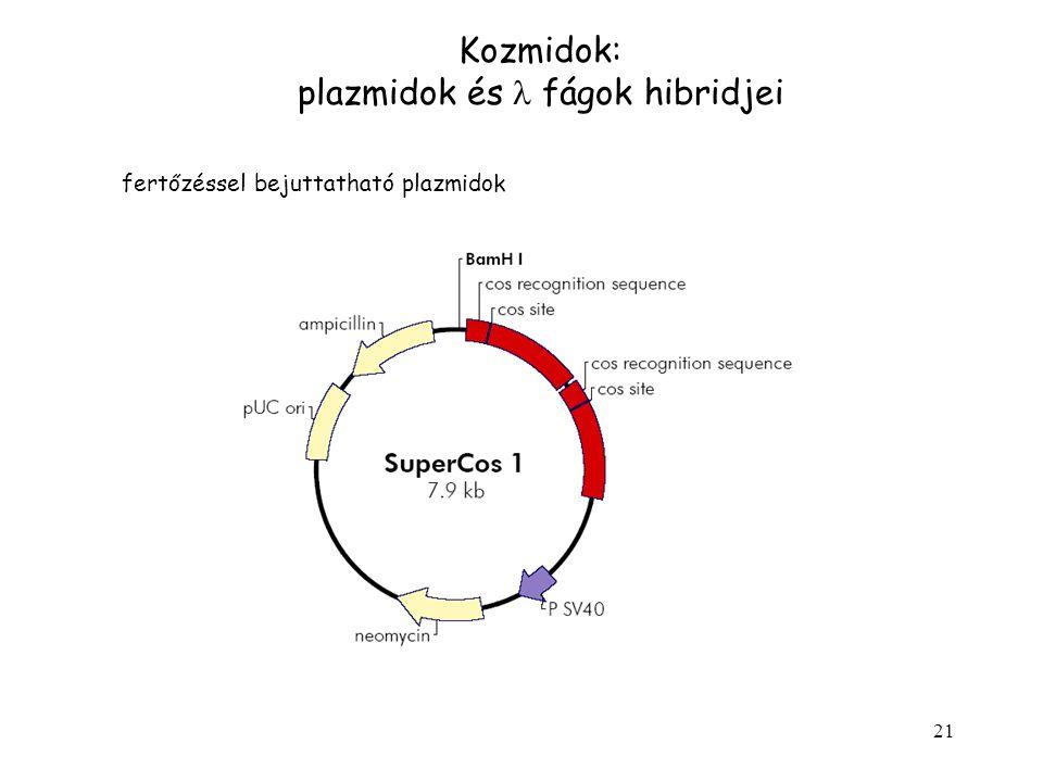 plazmidok és l fágok hibridjei
