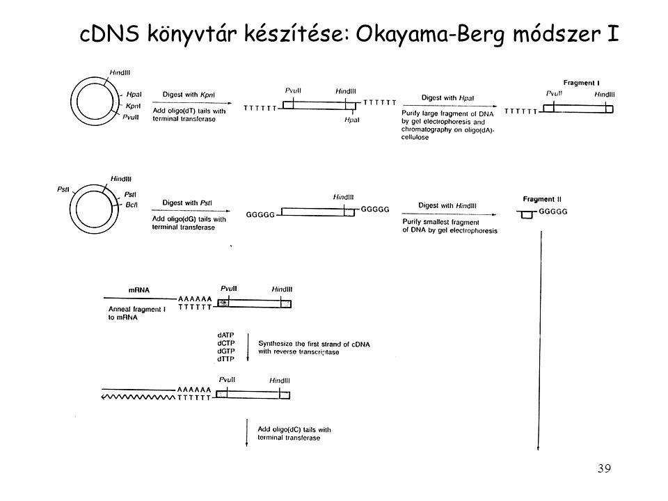 cDNS könyvtár készítése: Okayama-Berg módszer I