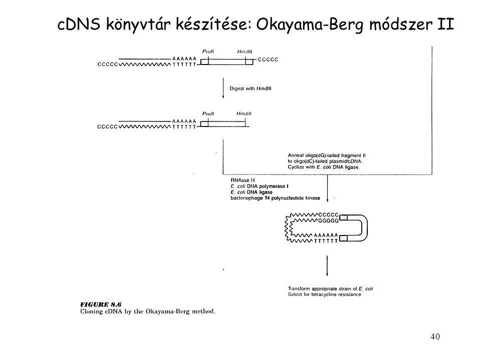 cDNS könyvtár készítése: Okayama-Berg módszer II