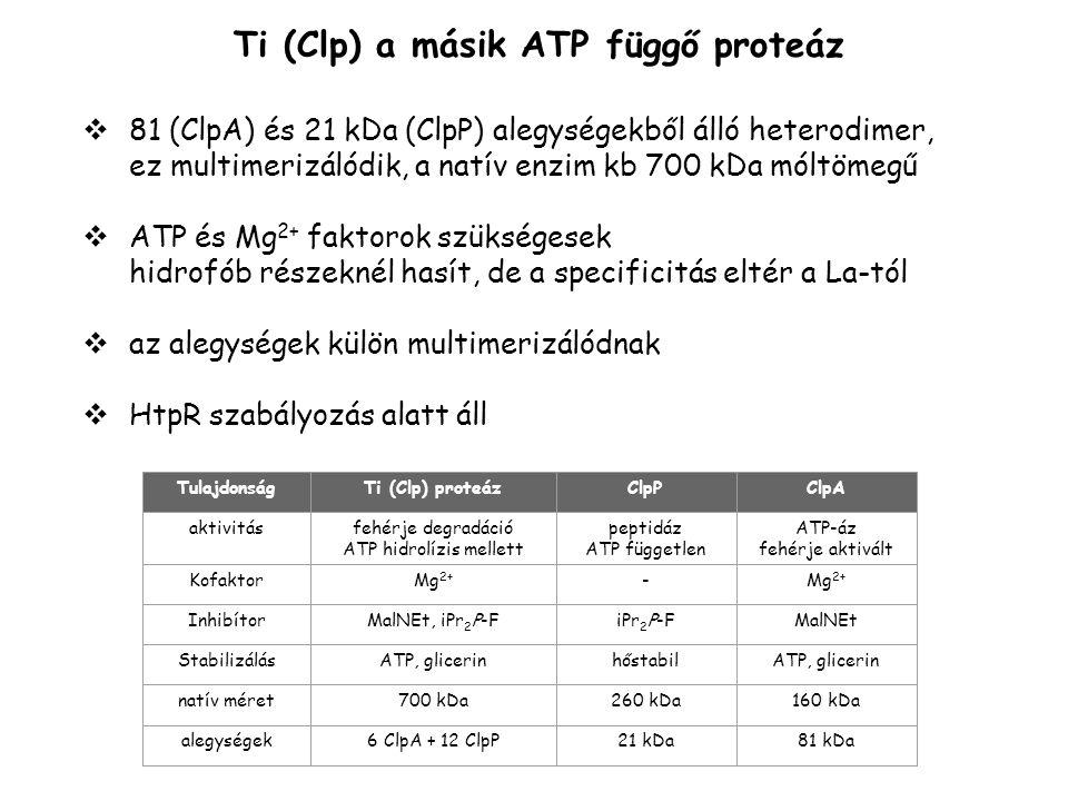 ATP hidrolízis mellett