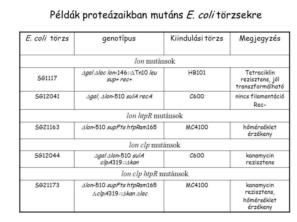 Példák proteázaikban mutáns E. coli törzsekre