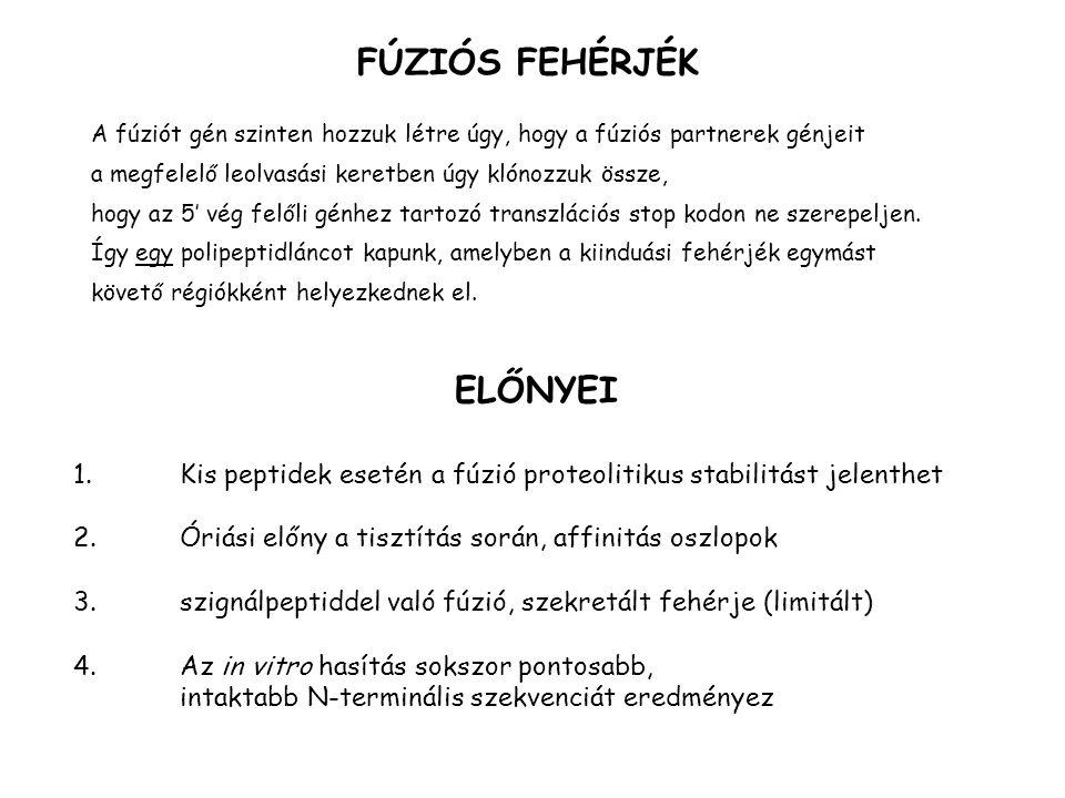 FÚZIÓS FEHÉRJÉK ELŐNYEI