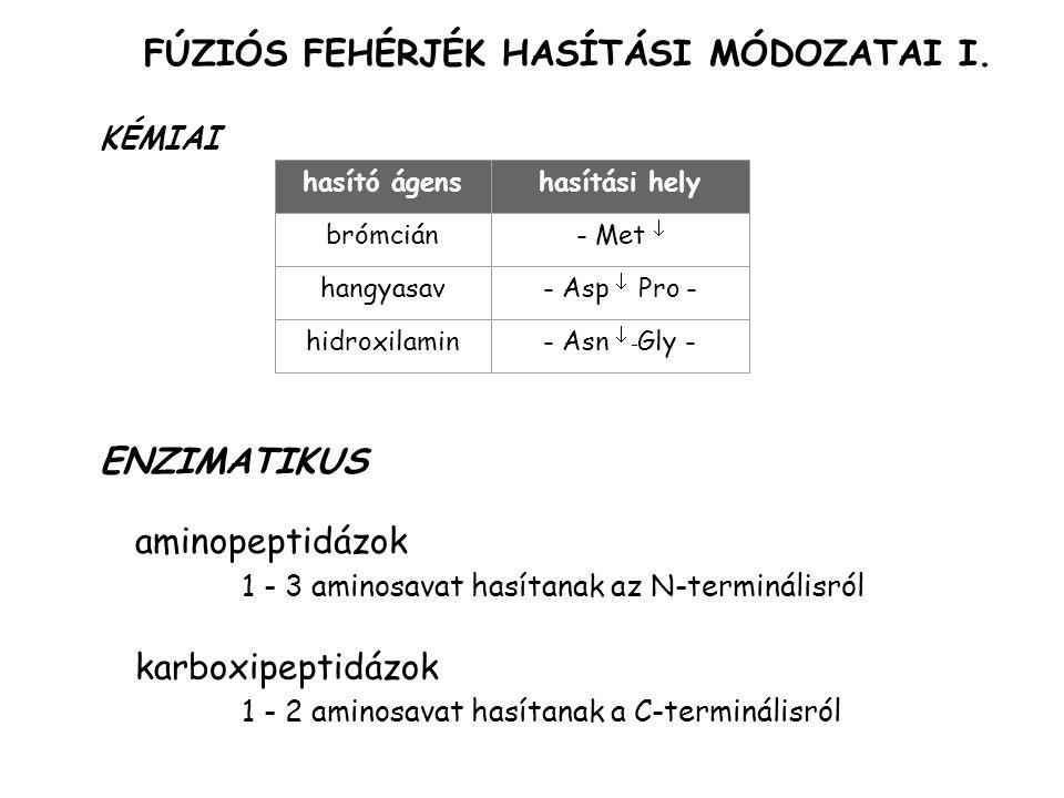 FÚZIÓS FEHÉRJÉK HASÍTÁSI MÓDOZATAI I.